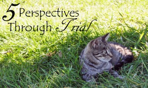 5-perspective-throug-trial